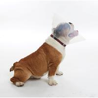 BUSTER E-Collar for brachycephalic dogs, kit with assorted range: 2 x XS, 3 x S, 3 x M, 2 x L