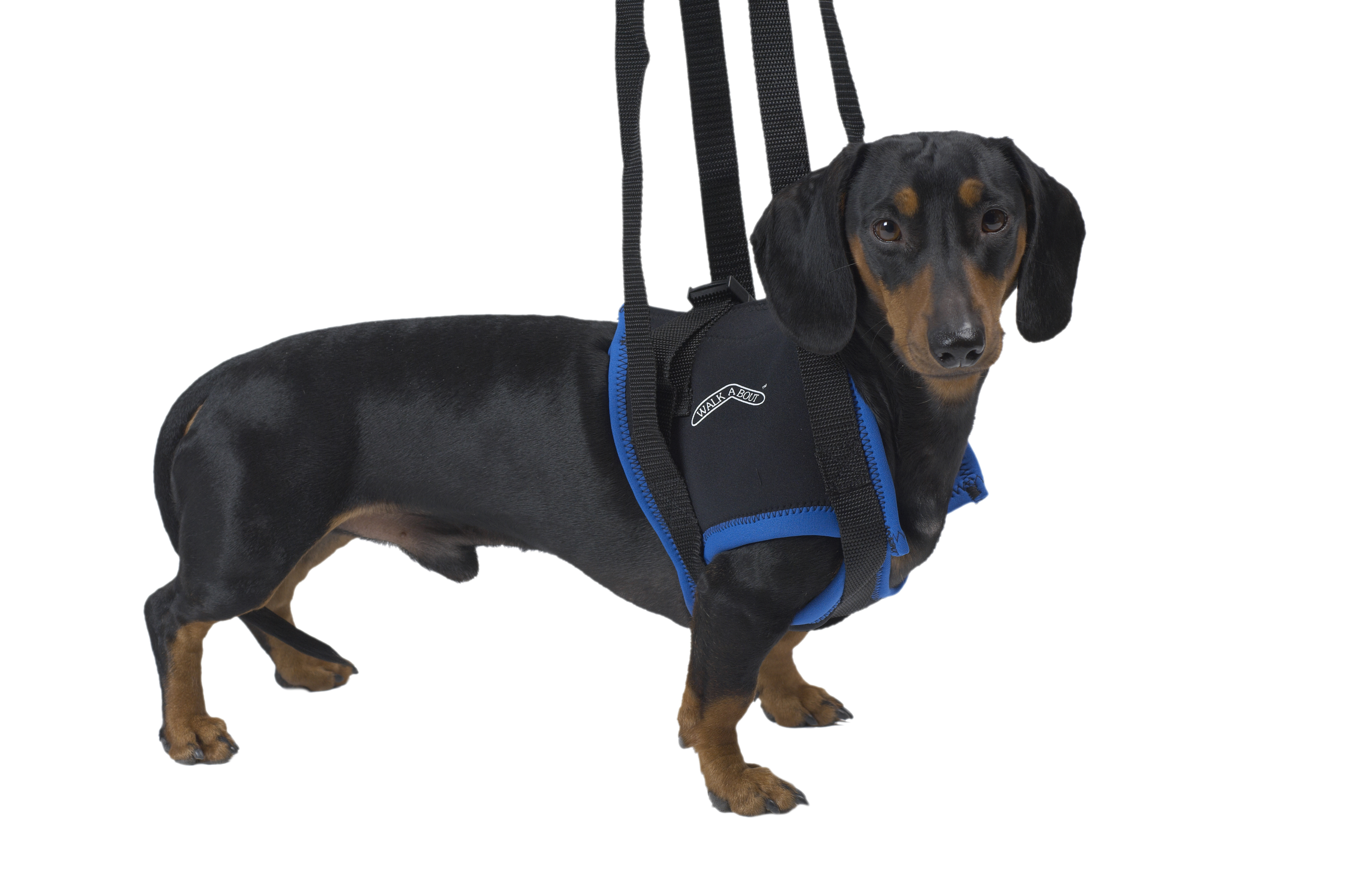 Walkabout lifting harness, front legs, large